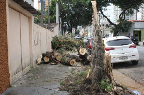 Queda de Árvore:  quem deve fazer a solicitação para a retirada?