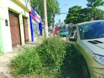 Toco de árvore na calçada: prefeitura regional responde