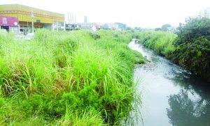 Aricanduva – Córrego está cheio de mato