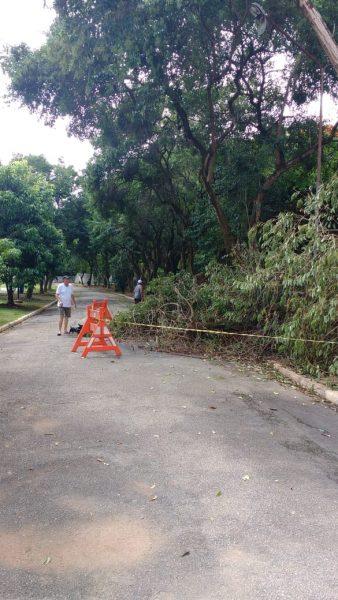 Galho de árvore não é retirado no Centro Esportivo