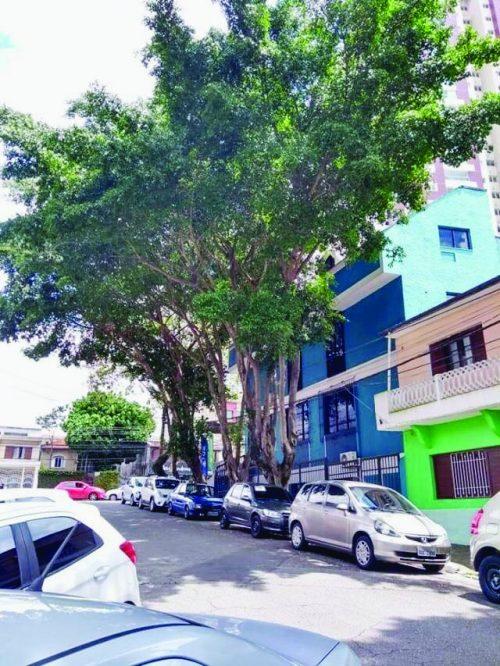 Risco de árvore cair na Rua Mestrinho